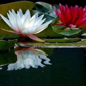 by Brenda Baird - Flowers Flowers in the Wild (  )