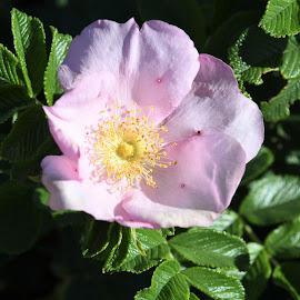 Illustration by J & M - Flowers Single Flower ( image, view, illustration )