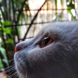 Dreams by Prasad Khobrekar - Animals - Cats Kittens (  )