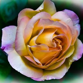 by Terry Oviatt - Flowers Single Flower