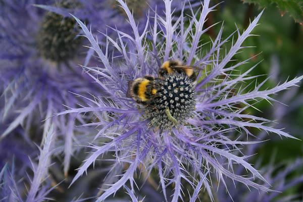 Fiore artico di Sadi Molteni