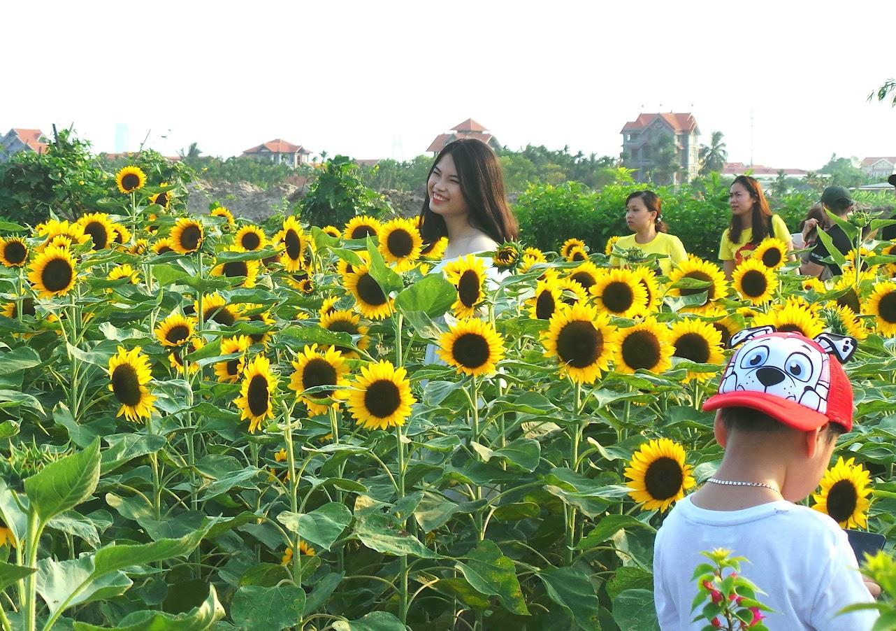 Vườn hoa Hướng Dương - Central Park Vsip Hải Phòng 6