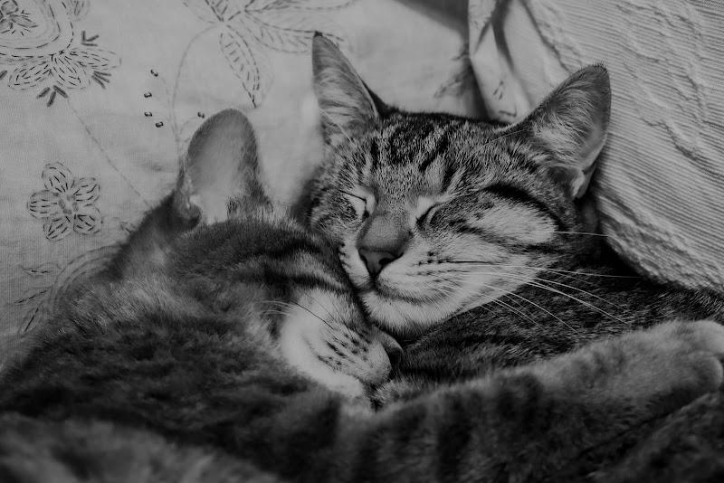 Amiche, infinita tenerezza di BeatriceCapone69