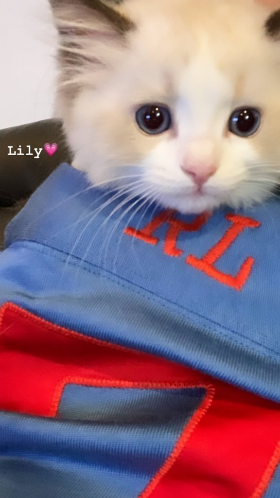 BLACKPINK-Lisa-Instagram-Story-new-cat-lily