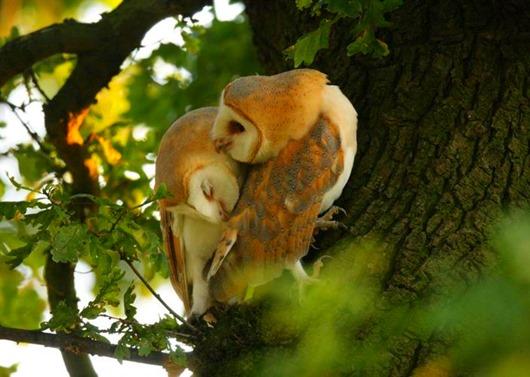 animal love 9
