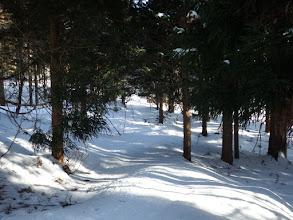 ここが破線路の林道?