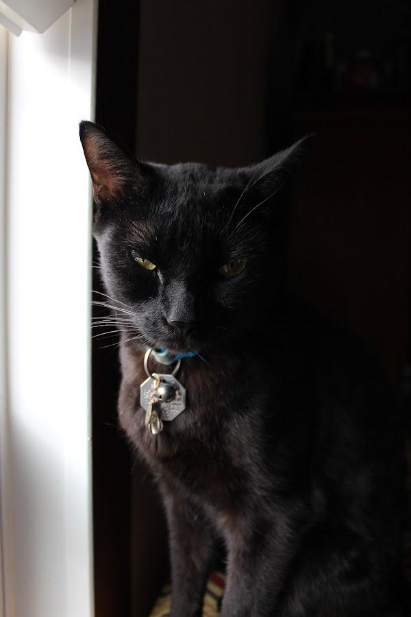 by Sheilla Johnson - Animals - Cats Portraits