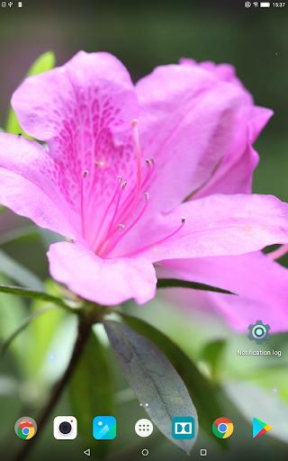 Beautiful Spring Flowers Live Wallpaper 1.0.4 screenshots 8