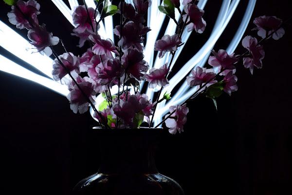 La magia da un vaso di gargiugram