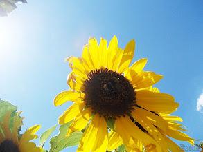 Photo: De jó egy kis árnyék...