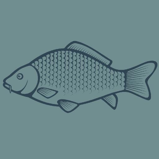 Carp Fishing Videos & Tips (app)