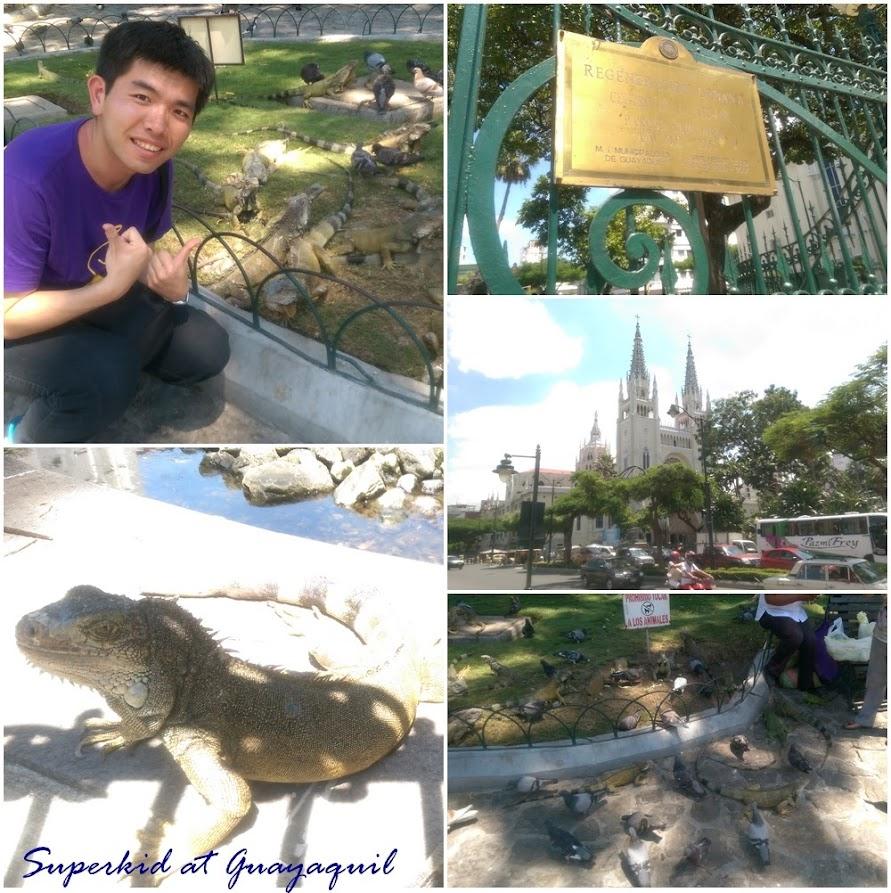 超多綠鬃蜥的公園