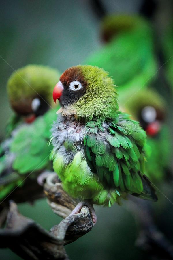 Drusillas by Dean Thorpe - Animals Birds