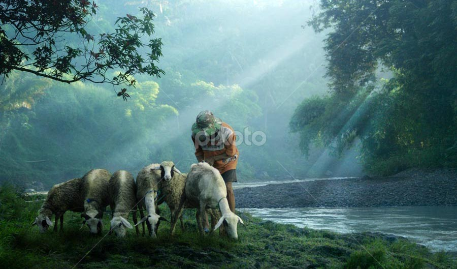 one morning by Budi Cc-line - Digital Art Places ( cold, morning, side river, deer )