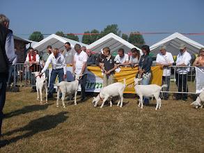 Photo: Rubriek 1 + 6: witte lammeren geboren tussen 14-2 en 9-4 2013. 1a. Marijke 205; 1b. Marijke 207; 1c. Hilda 12; 1d. Hilda 13;  2a. Anneke 10 vd Vriendsenhof.