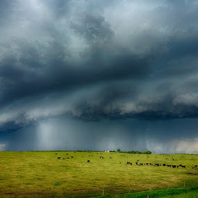by Kendra Perry Koski - Landscapes Cloud Formations ( hail, thunder, 2017, tripp county, thunderstorm, dakotawindsphoto.com, storm cell, green, dallas, colome, us, south dakota, cattle, rural, cows, country, calves, gregory county, lightning, blue,  )
