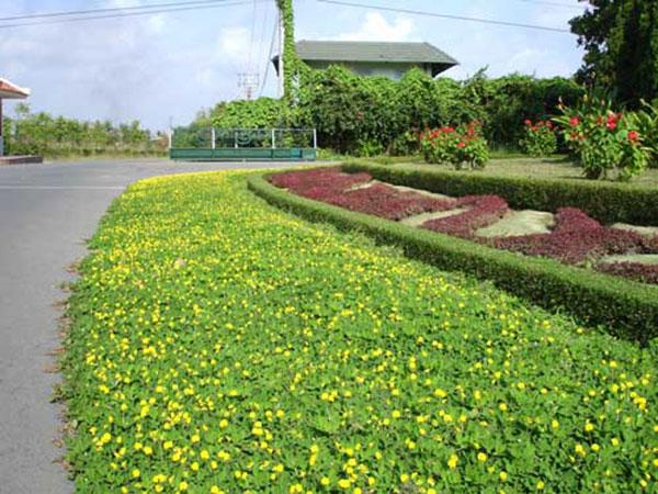 Doanh nghiệp bỏ tiền ra để sử dụng dịch vụ và sẽ nhận được không gian cây xanh như ý