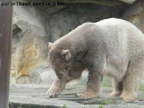 Photo: Knut testet den Bodenbelag ;-)