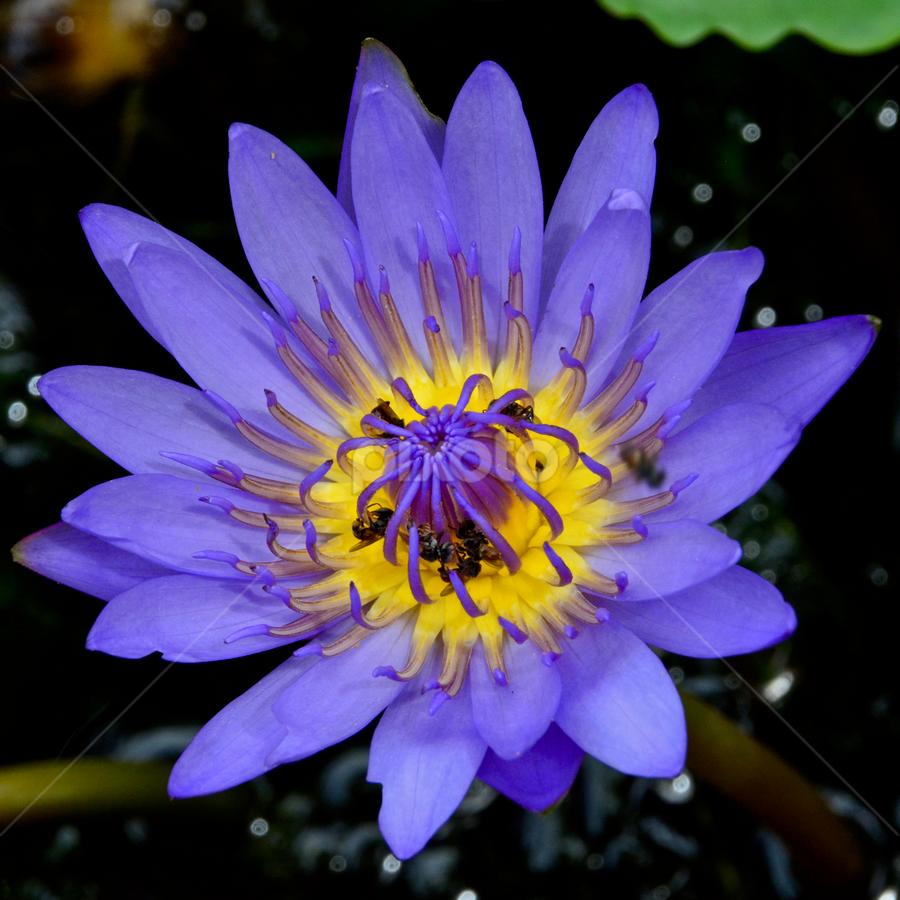 by Richard Idea - Flowers Single Flower