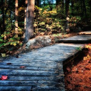 Autumn Steps.jpg