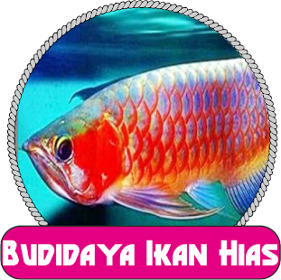 Cara budidaya ikan hias Populer - náhled