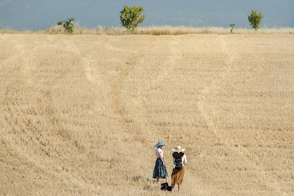 In un campo di grano di Nefti-Monica