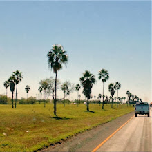 Photo: Valley of the Palms - this is the cluse that we're getting close to Mom and Dad's Paradise Park!