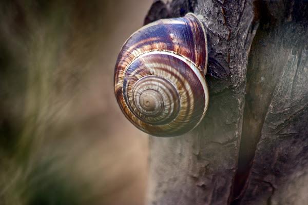 Spirale naturale di Fotodiale