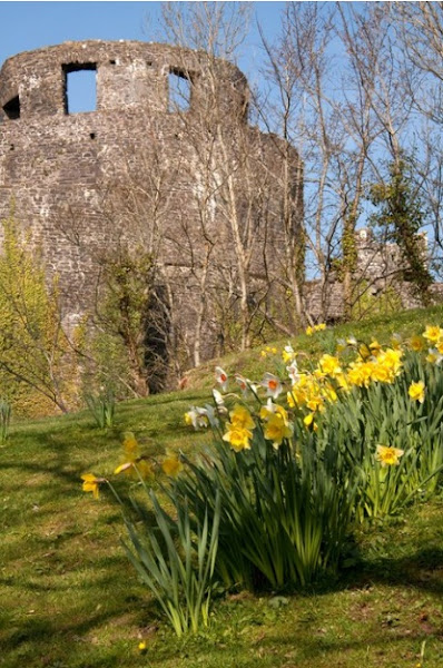 Photo: Castle Woods Llandeilo by V Matthews