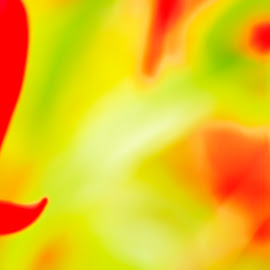 The Accidental Fuschia by James Johnstone - Abstract Macro
