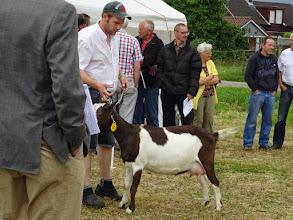 Photo: Rubriek 2. eenjarige bonte geiten. 1a. Zwaanheuvel Roxanne 3.