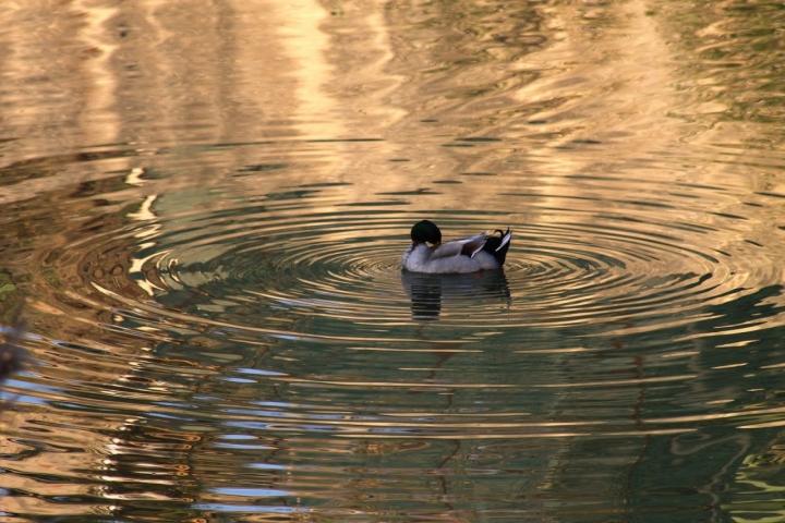 Cerchi sull'acqua. di Petruzzo