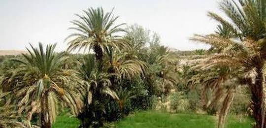 Riad Sarayas
