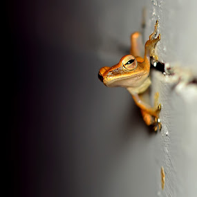 Climber by Gustaman Syah - Animals Amphibians