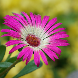 by Ad Spruijt - Flowers Flowers in the Wild