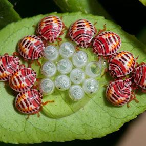 Nature's necklace. by Prasanna AV - Nature Up Close Hives & Nests