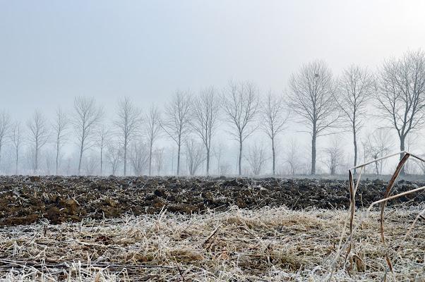 gennaio in campagna di tatiana morello