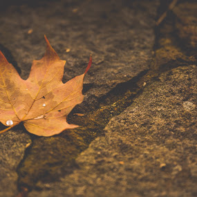 Fall by Madhujith Venkatakrishna - Nature Up Close Leaves & Grasses (  )