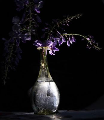 Glicine luminoso di maurimm