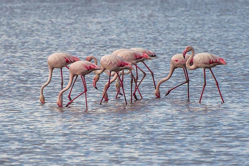 pink flamingos di massimo bertozzi