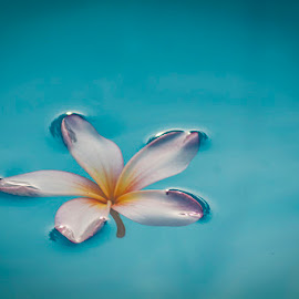 Flowing by Dody Mawardi - Artistic Objects Other Objects ( artistic objects, calm, close up, flower,  )