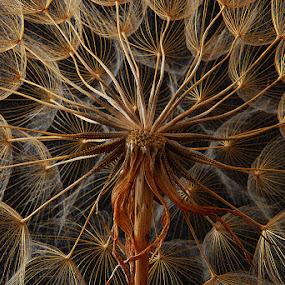 by Enver Karanfil - Nature Up Close Leaves & Grasses