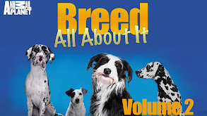 Bull Terrier thumbnail