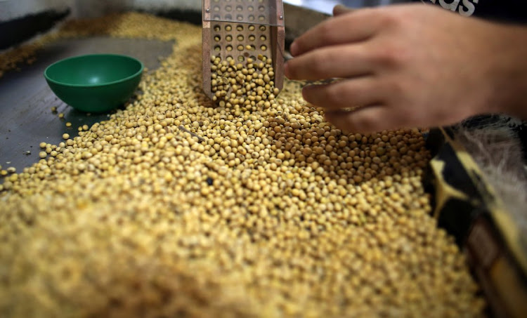 Soy beans. Picture: REUTERS/AGUSTIN MARCARIAN