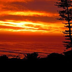 Sunrise by Nico Ebersohn - Landscapes Cloud Formations ( orange, black, silhouette, trees, water, landscape )