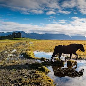 by Boštjan Rakovec - Landscapes Prairies, Meadows & Fields ( water, iceland, horses, farmland, house, abandoned )