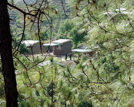 Photo: Looking through the pine trees at the cottages