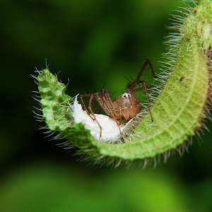 Don't Touch My Baby - Lynx Spider.jpg