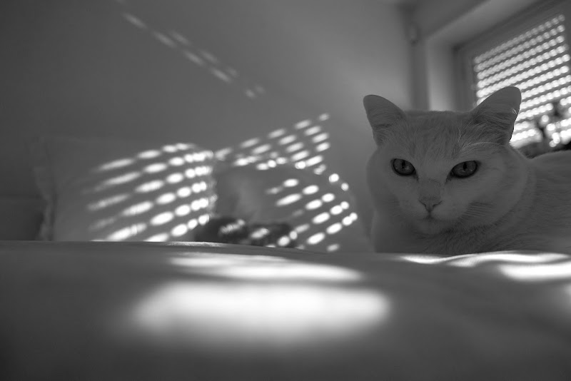 the cat is on the bed di francesca bolla