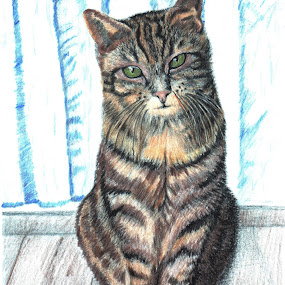 Kitty cat by Paul Drajem - Drawing All Drawing ( kitty cat, cat, color pencils, color, art, sketching, drawing, artwork,  )